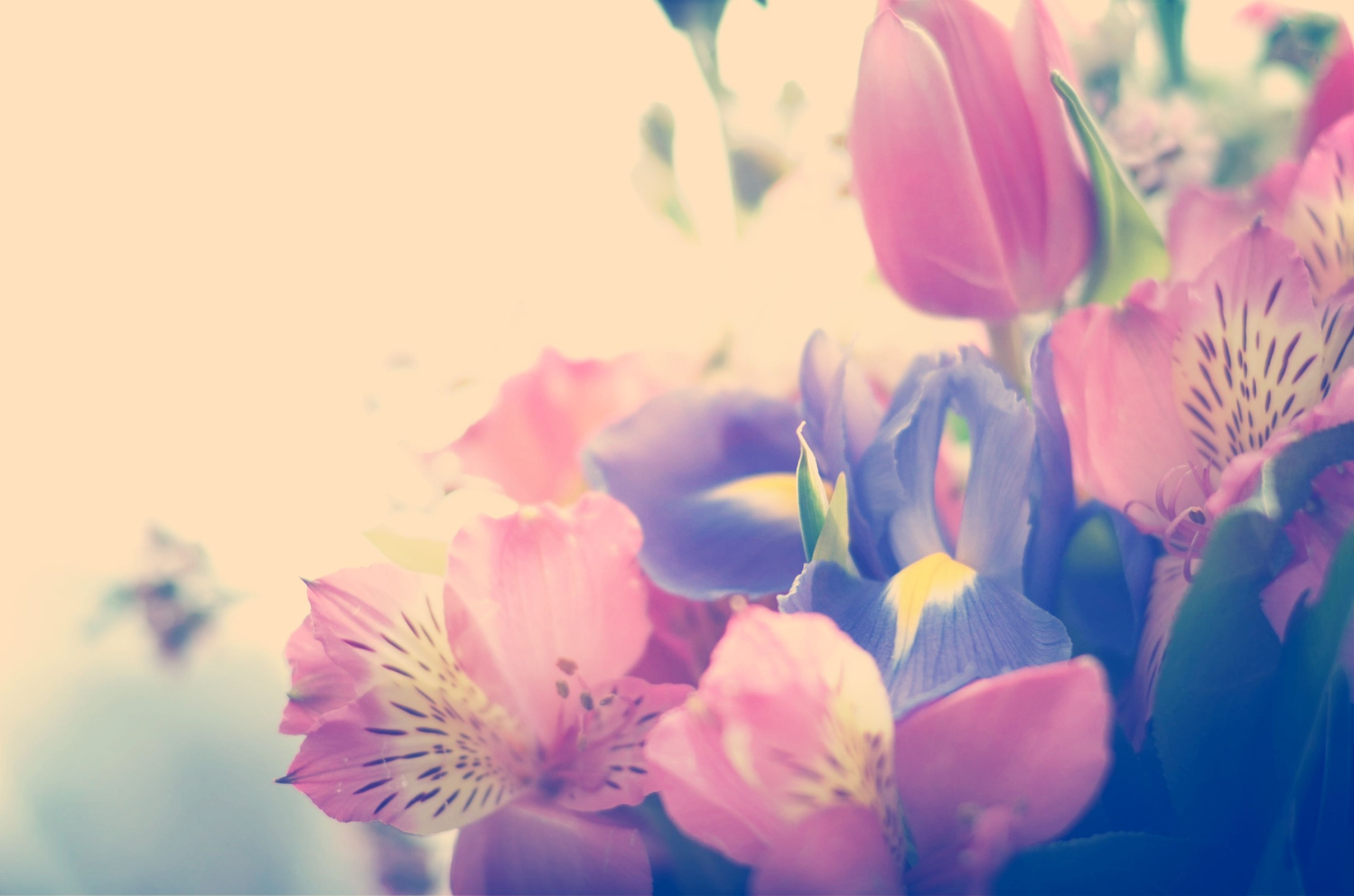flower, petal, freshness, fragility, flower head, growth, beauty in nature, pink color, close-up, blooming, nature, plant, focus on foreground, in bloom, blossom, outdoors, day, selective focus, pink, park - man made space