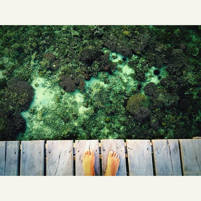 Kanawa Kanawaisland Flores Komodo INDONESIA Ocean Coral Coralreef Feet The Essence Of Summer- 2016 EyeEm Awards
