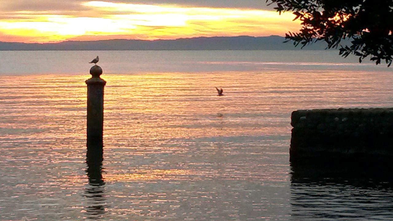 Sunset Water Beauty In Nature Outdoors Reflection Nature Tranquility Silhouette Romantic Sky Horizon Over Water No People Lake Lake Shore Garda Lake Italy Gardasee,Italien Bird Lake View Seagull Sunset Silhouettes Garda Lake