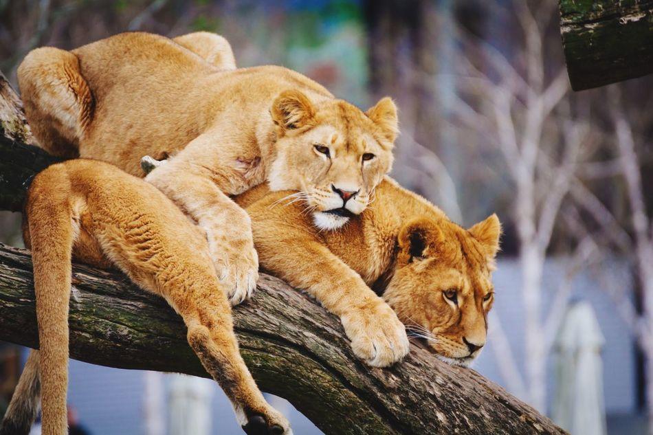 Beautiful stock photos of cat, Animal, Animal Head, Animal Themes, Animals In The Wild