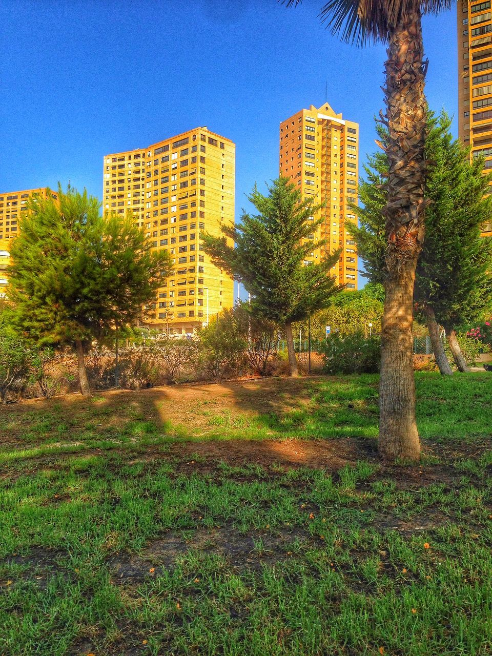 architecture, building exterior, tree, built structure, grass, growth, no people, day, outdoors, clear sky, city, nature, skyscraper, sky