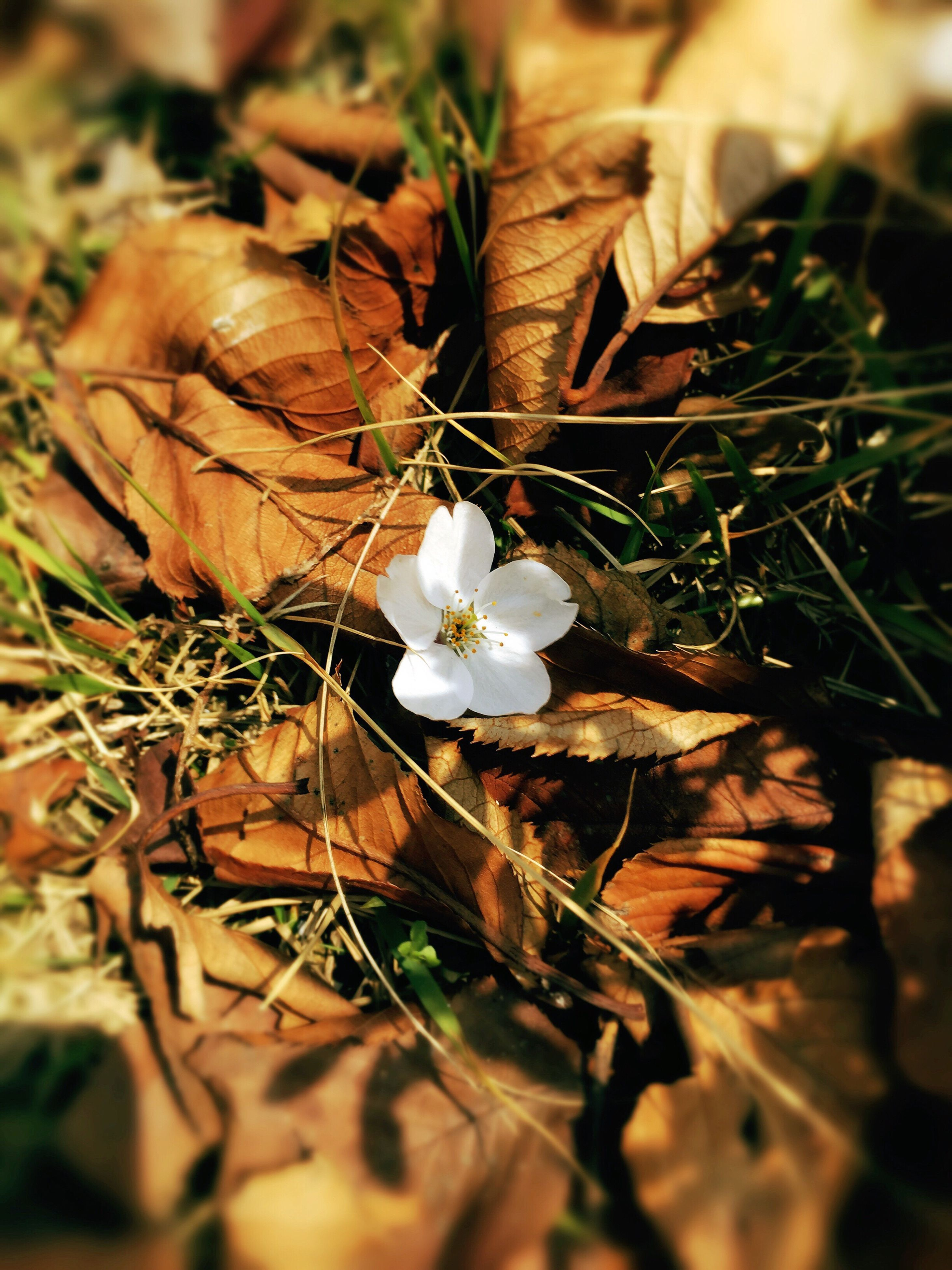 nature, leaf, plant, growth, outdoors, close-up, no people, fragility, beauty in nature, freshness, day, flower head