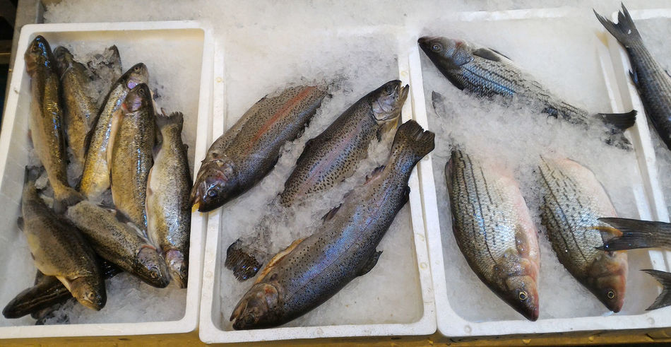 Catch of the day, selection of fish, trout, salmon and sea bass on ice at retail store display Catch Of Fish Catch Of The Day Choice Close-up Day Fish Fish Market Food Food And Drink For Sale Freshness Healthy Eating Ice Market No People Personal Perspective Retail  Retail Display Salmon Sea Bass Seafood Shopping Store The Shop Around The Corner Trout
