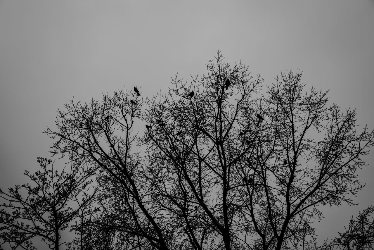 Nature Sky Outdoors Plant Growth Tree Nature Photography Blackandwhite Silhouette Branch Sky And Trees Negative Space Large Group Of Animals Beauty In Nature Flock Of Birds Close-up Togetherness Animal Themes
