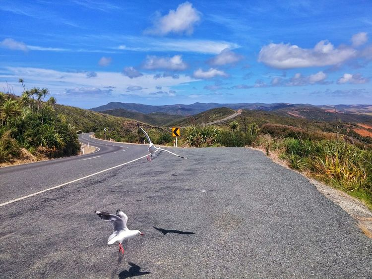 https://youtu.be/Tiaheep1oEs 😢i😢i😢i😢i😢i wish👏 Summer NZ Style Flying Mid-air Tourism Nature Landscape Cape Reinga New Zealand Respect And Enjoy😍 SH1 New Zealand Unapologetically Aupouri Peninsula Motuopao Island SH 1N State Highway 1 New Zealand Travel Destinations Pray For Sweden Twilight Beach Te Paki Dunes Cape Maria Van Diemen Harakeke My Country Is Beautiful Peach Colored Dunes Te Werahi Beach New Zealand Culture Betterlandscapes