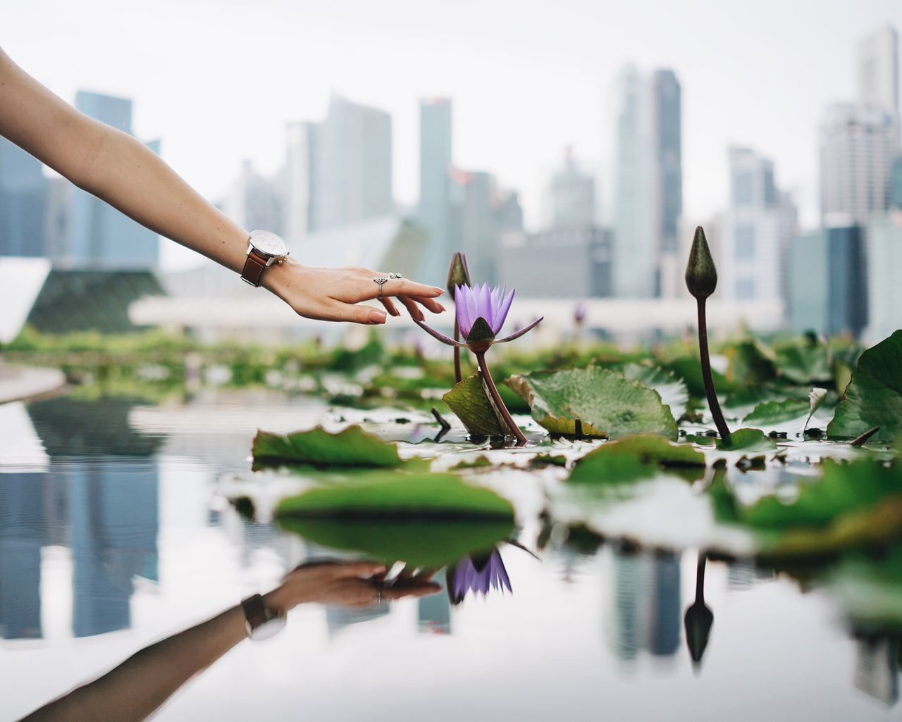 urban greens Flower Water Water Lily City Skyscraper Nature Freshness Hand Hand Of A Girl Skyline Singapore Urban Nature Reflection Reaching Out Plant Growth Lake Beauty In Nature Focus On Foreground Bright Cloudy Day Connected With Nature Touch Wristwatch TakeoverContrast