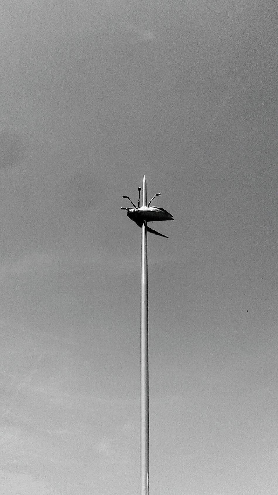 Fly Needle Insect Igła Mucha Blackandwhite Fine Art Photography
