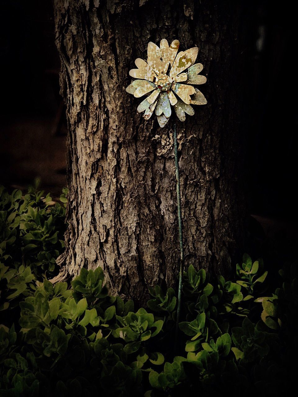 tree trunk, tree, growth, nature, textured, bark, beauty in nature, outdoors, no people, leaf, plant, close-up, day, flower, fragility, fungus, toadstool, freshness