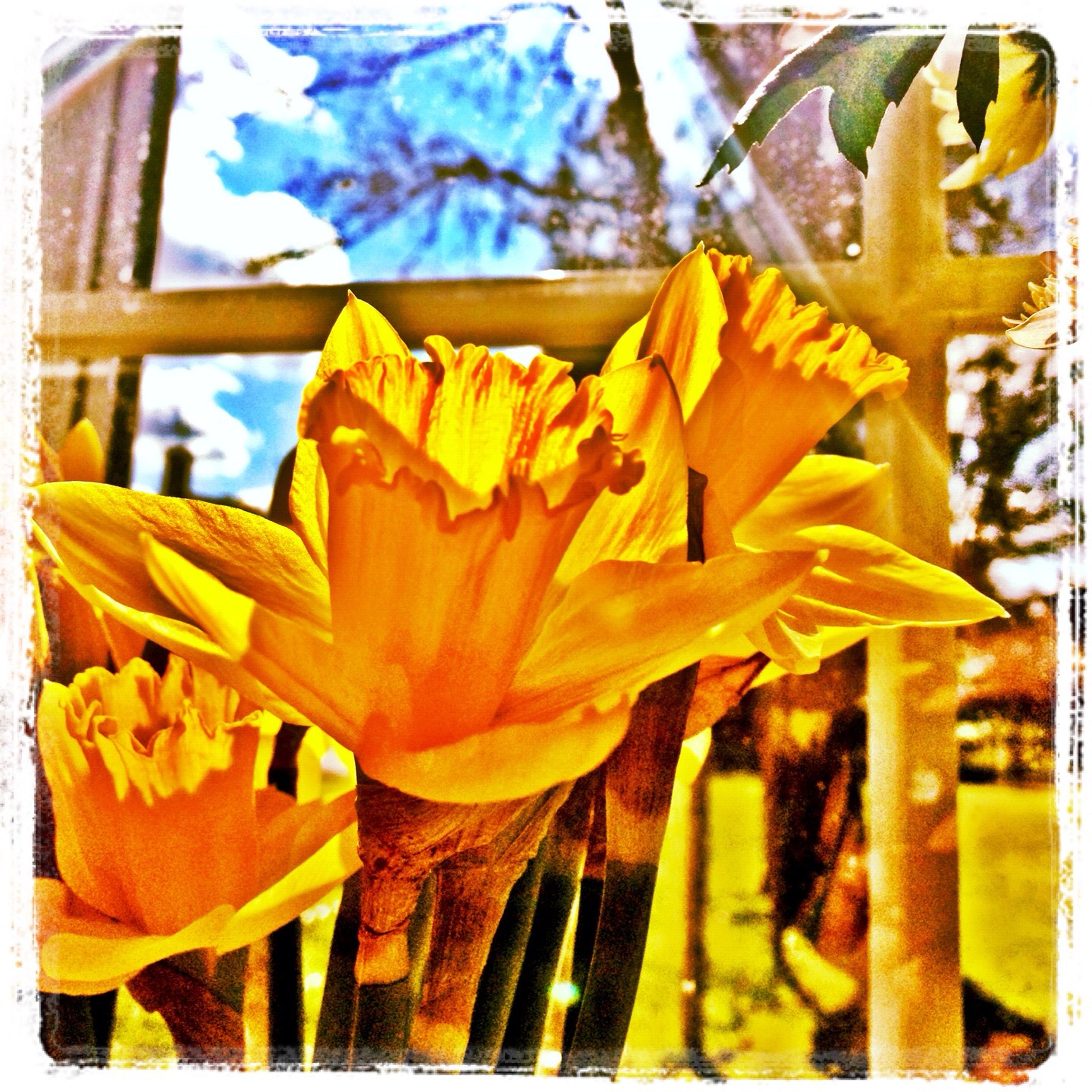 transfer print, auto post production filter, yellow, close-up, freshness, flower, focus on foreground, day, outdoors, petal, no people, selective focus, fragility, orange color, low angle view, multi colored, nature, sunlight, frame
