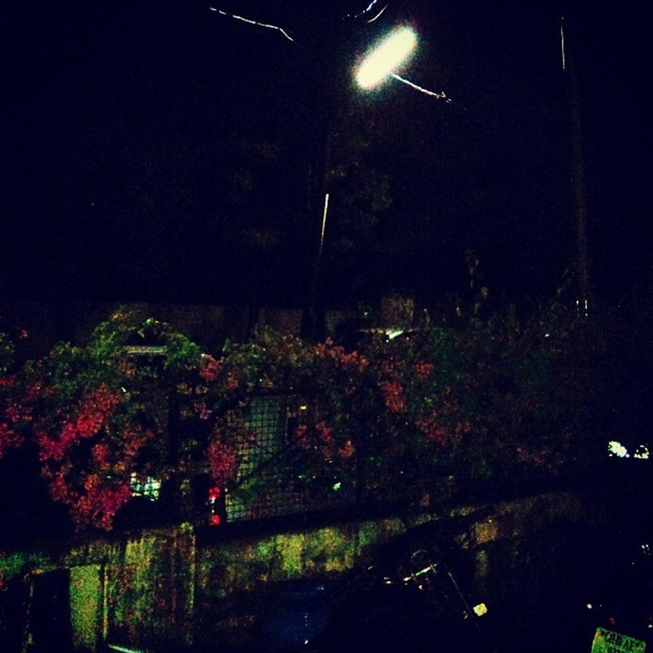 Rain night Downpour Heavy Rain Cold weather chandigarh instapic