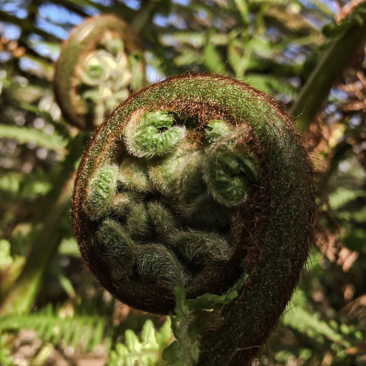 Tree Fern Arboretum Fern Spring California Green Color Nature Outdoors Beauty In Nature