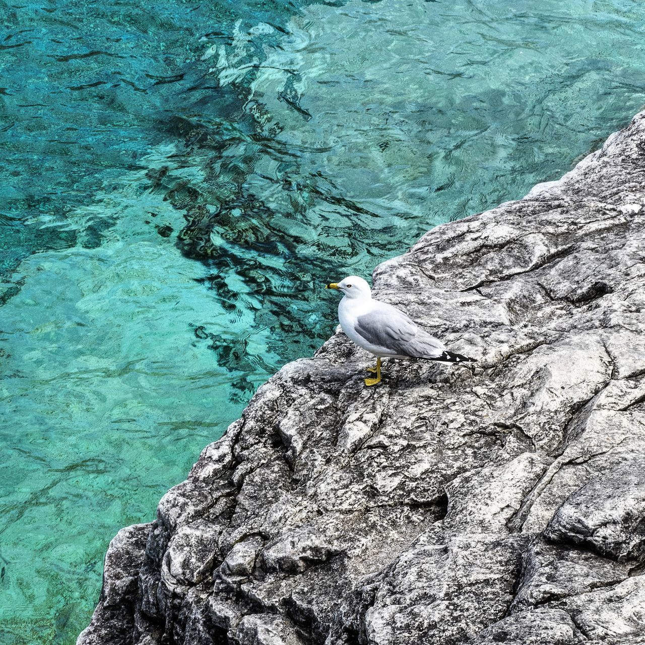 Water Nature Beach Sea Beauty In Nature Close-up Grotto Shoreline Clear Water_collection Coastal Bird Seagull Clean Pure Fresh Blue Tranquility The Great Outdoors - 2017 EyeEm Awards