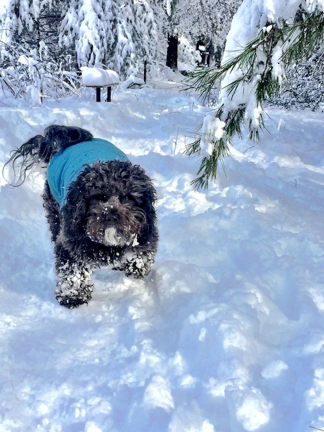 Little Dog Little Doggy Little Doggy Playing In The Snow Happy Dog Happy Snow Dog Little Black Dog Dog Playing In Snow