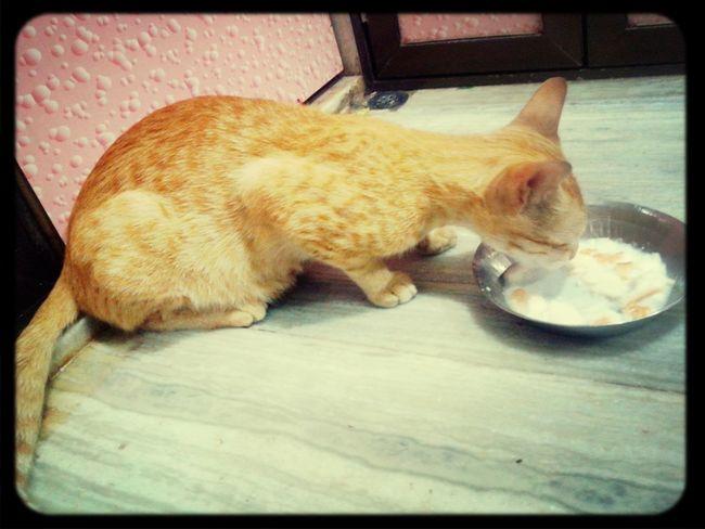 I Love My Cat ❤ Feeding  Milk. Cute Pets Cat
