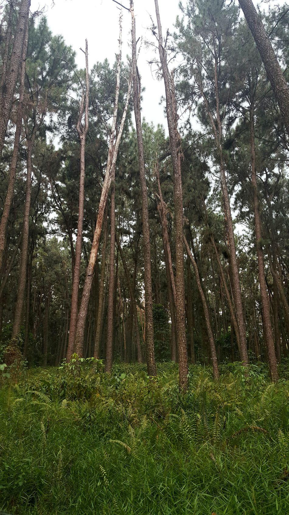 Jungle book... Naturelovers Jungle Junglebook Roadlesstravelled Greenery Tall Trees Nature Godscreation