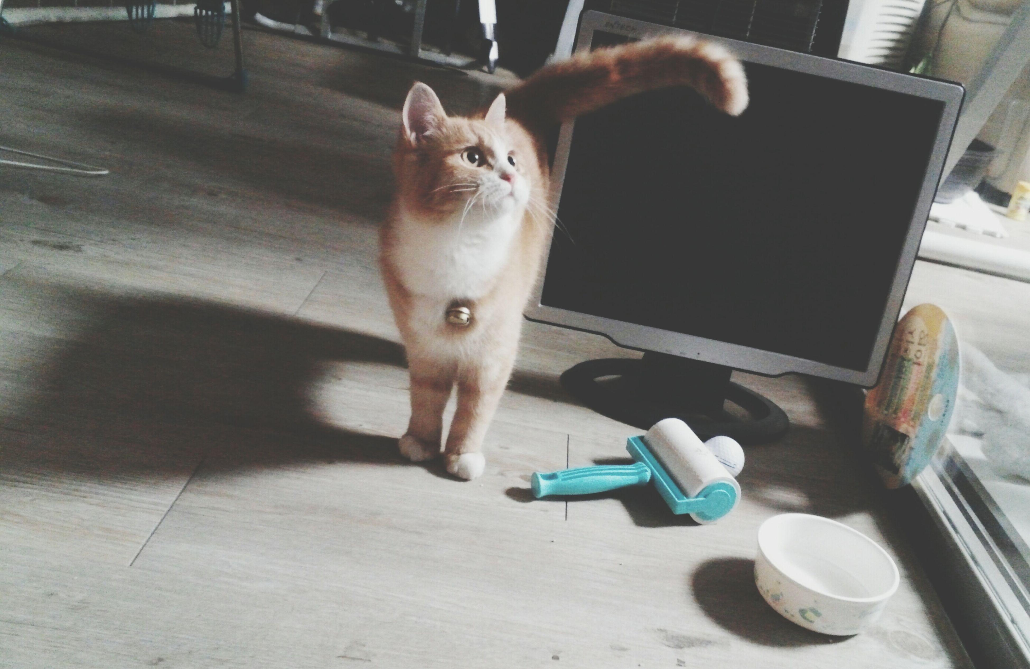 I Love My Cat ❤ Cute :) <3<3<3 Pet Photography