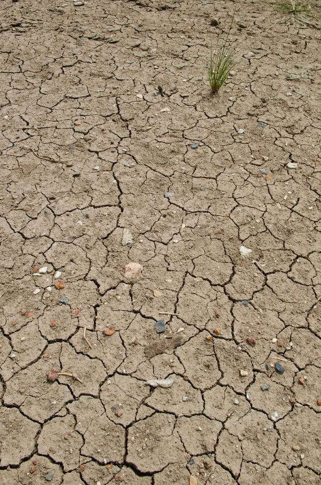 Pattern of cracked and dried soil and weed Abstract Backgrounds Cracked Day Dehydration Dry Environment Environmental Issues Full Frame Ground Landscape Nature No People Outdoors Parched Soil On The Ground Textured  Weeds