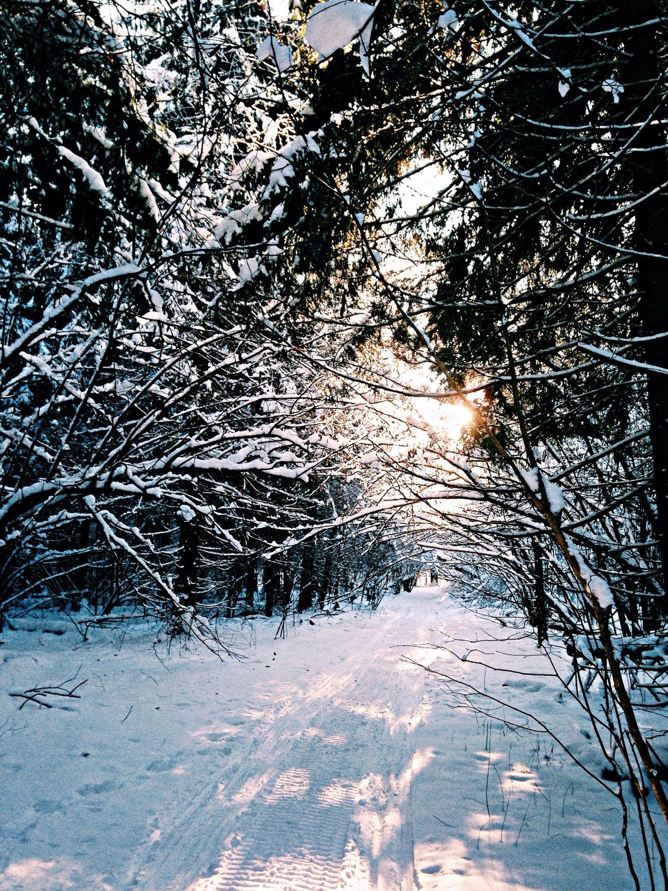Winter First Eyeem Photo Nature Sun Light
