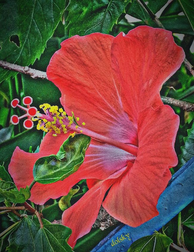 RedFlower Red Lover Flowerphotography Beautiful Nature
