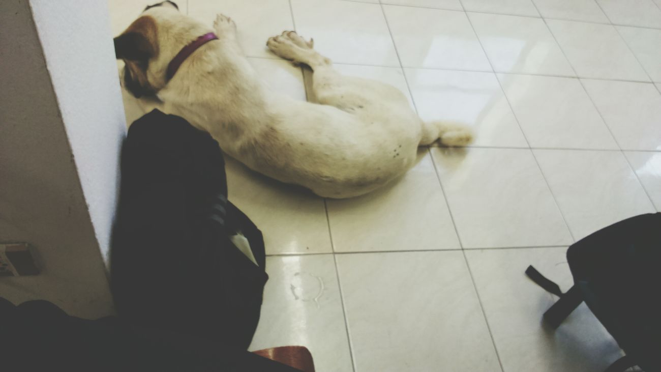 Superdog Dog❤