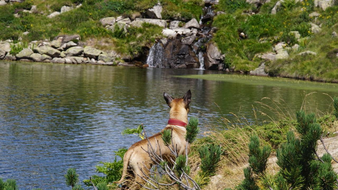 Estany de Beciver. Val D'AranAnimal_collection Wildlife & Nature Mountain_collection Val D'Aran