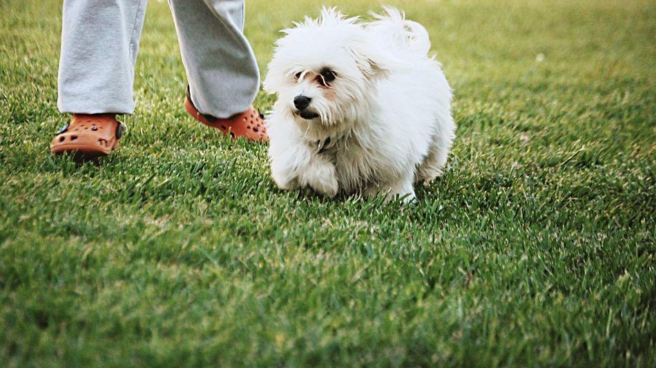 Beautiful stock photos of cute, , Agility, Animal Themes, Clogs