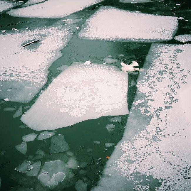 Dead Swan // Berlin Winter