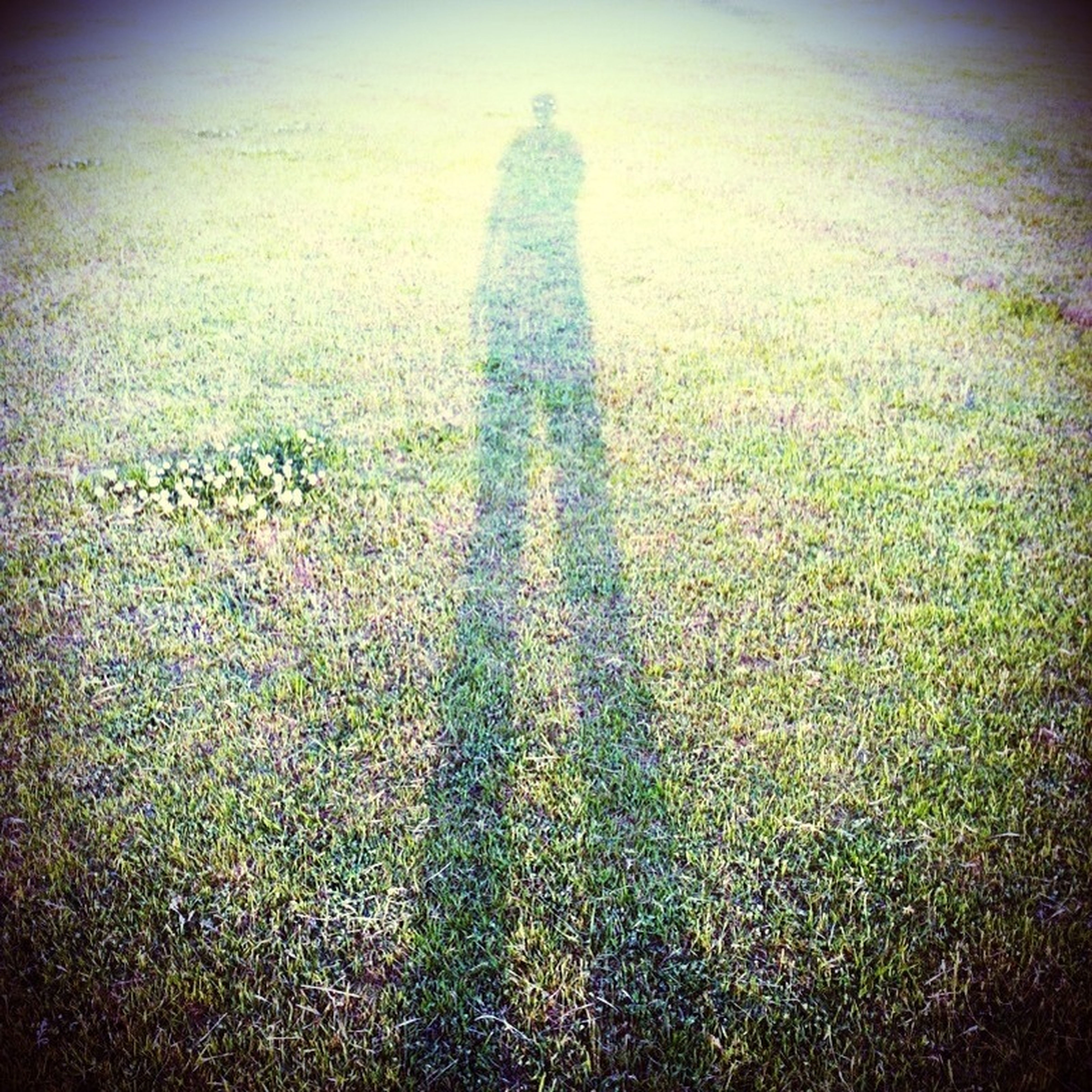 grass, grassy, shadow, field, sunlight, standing, high angle view, auto post production filter, day, lifestyles, growth, nature, outdoors, leisure activity, plant, unrecognizable person, green color, focus on shadow
