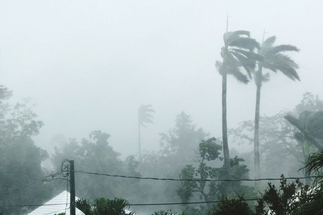Hurricane Nicole Riding Out The Storm Bermuda Hurricane Nicole 2016 Hurricane Nicole Storm Watching Tree Fog Foggy Weather Low Angle View Growth Plant Sky Nature Tranquility Scenics Day Tall - High Beauty In Nature Mist Tranquil Scene No People