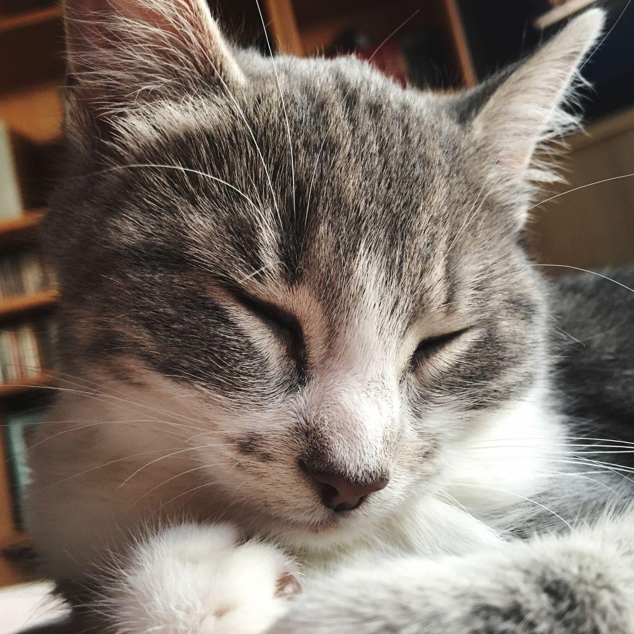 Cat Domestic Cat Pets Animal Themes Domestic Animals Chats Cute Pets Mycat Cats Of EyeEm Cute Cats Animals Love Chaton Baby One Animal Cute Cats Animal Chat Babycat