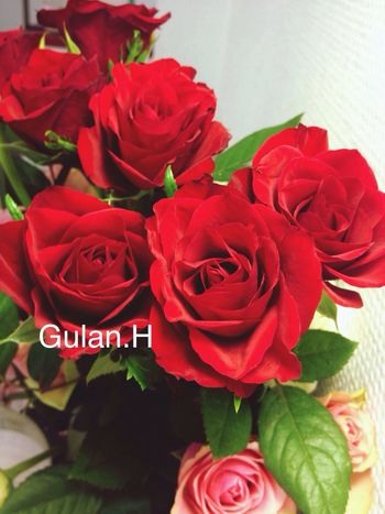Fashion Nature Beautiful Happy Popular Photos Roses Love Photography Style Landscape