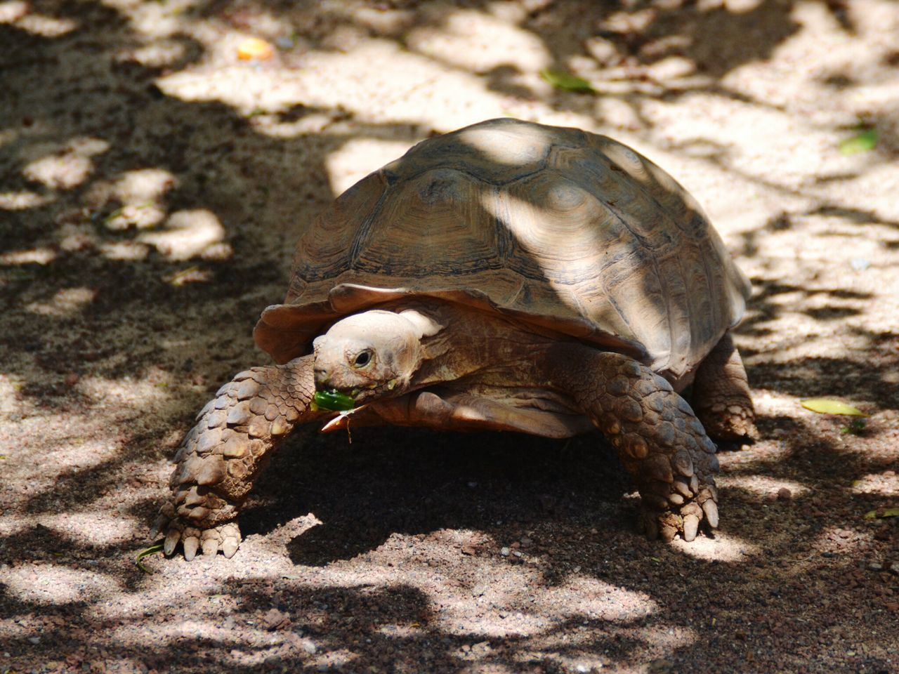 animal themes, one animal, shadow, sunlight, animals in the wild, no people, day, sand, animal wildlife, outdoors, nature, tortoise, close-up, tortoise shell, mammal