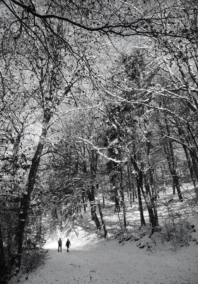 Nerotal Beauty In Nature Blackandwhite December Explore Growth Hike Nature Nerotal Outdoors Snow Winter Winter Wonderland Wintertime Woods