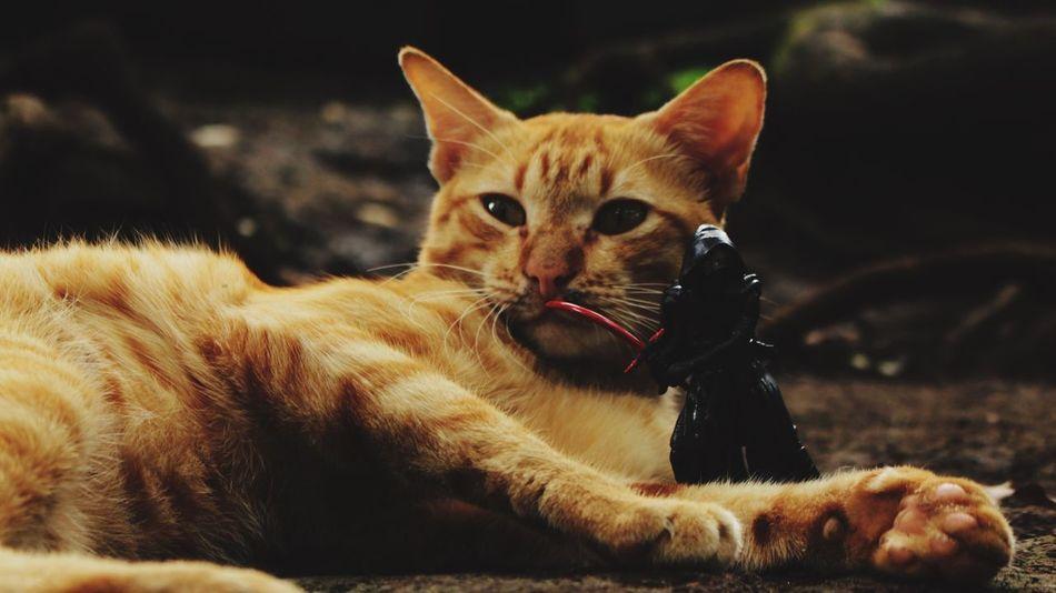 Aku akan melindungimu kucing
