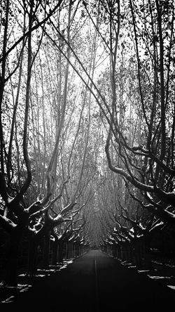 Tree Black & White