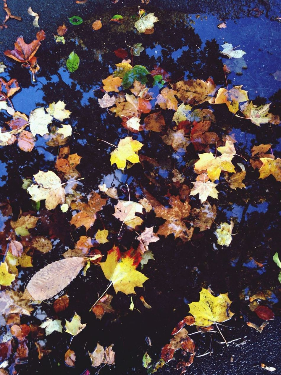 Leaves Autumn Water Reflections Eye4photography