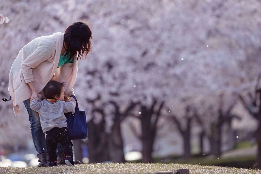 Capture The Moment Depth Of Field Spring Cherry Blossoms Motherhood People Child Snapshots Of Life Uzuki Of The Flower Uzu St. Still Life Tranquil Scene Fine Art Nature Sakura Fantasy The Secret Spaces Art Is Everywhere Beauty In Nature Photography Themes Full Frame Detail Sigma EyeEm Best Shots 17_04 Long Goodbye EyeEmNewHere TCPM The Photojournalist - 2017 EyeEm Awards The Portraitist - 2017 EyeEm Awards Live For The Story Lost In The Landscape