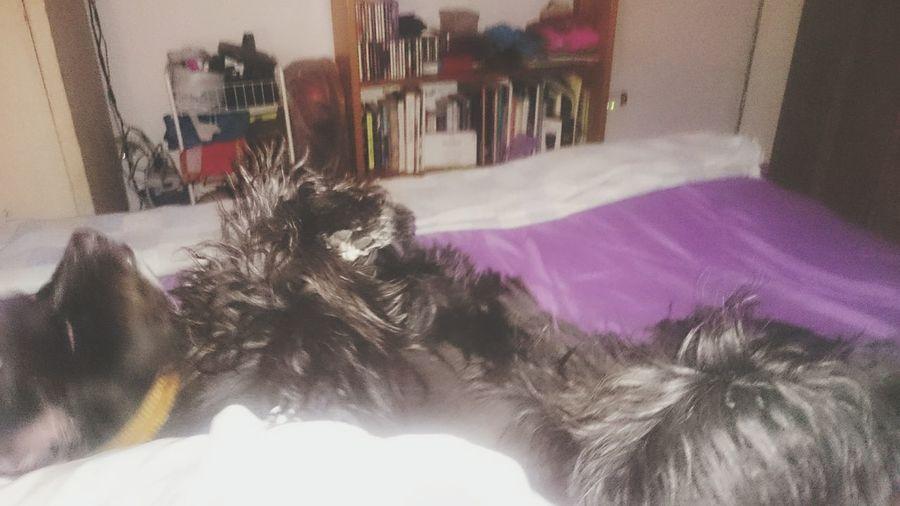 Still Motion Shake My Head Smh Lol Spoiled Dog Bed Dog Petsoneyeem Pet Photography  My Dog Pets Corner Sleepy