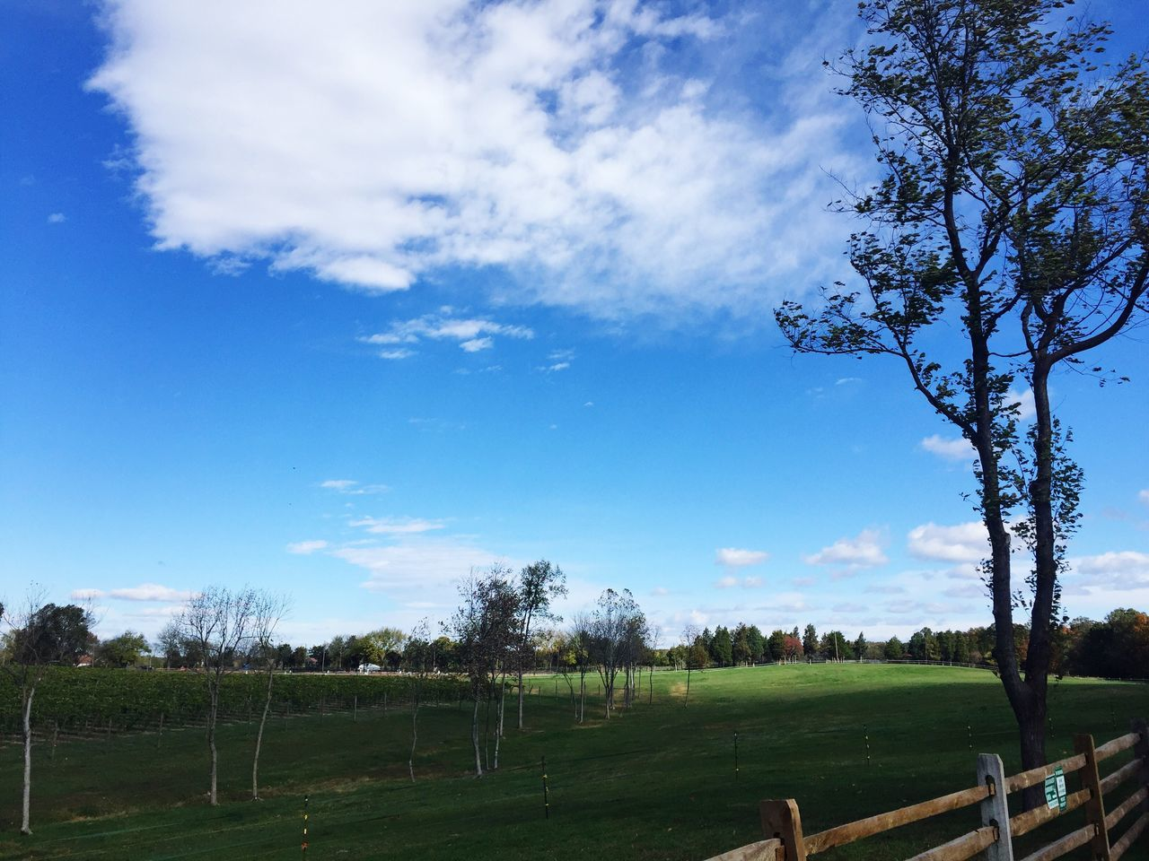 tree, sky, nature, field, landscape, rural scene, cloud - sky, agriculture, scenics, beauty in nature, tranquility, tranquil scene, no people, day, grass, outdoors, pasture, blue, growth, animal themes