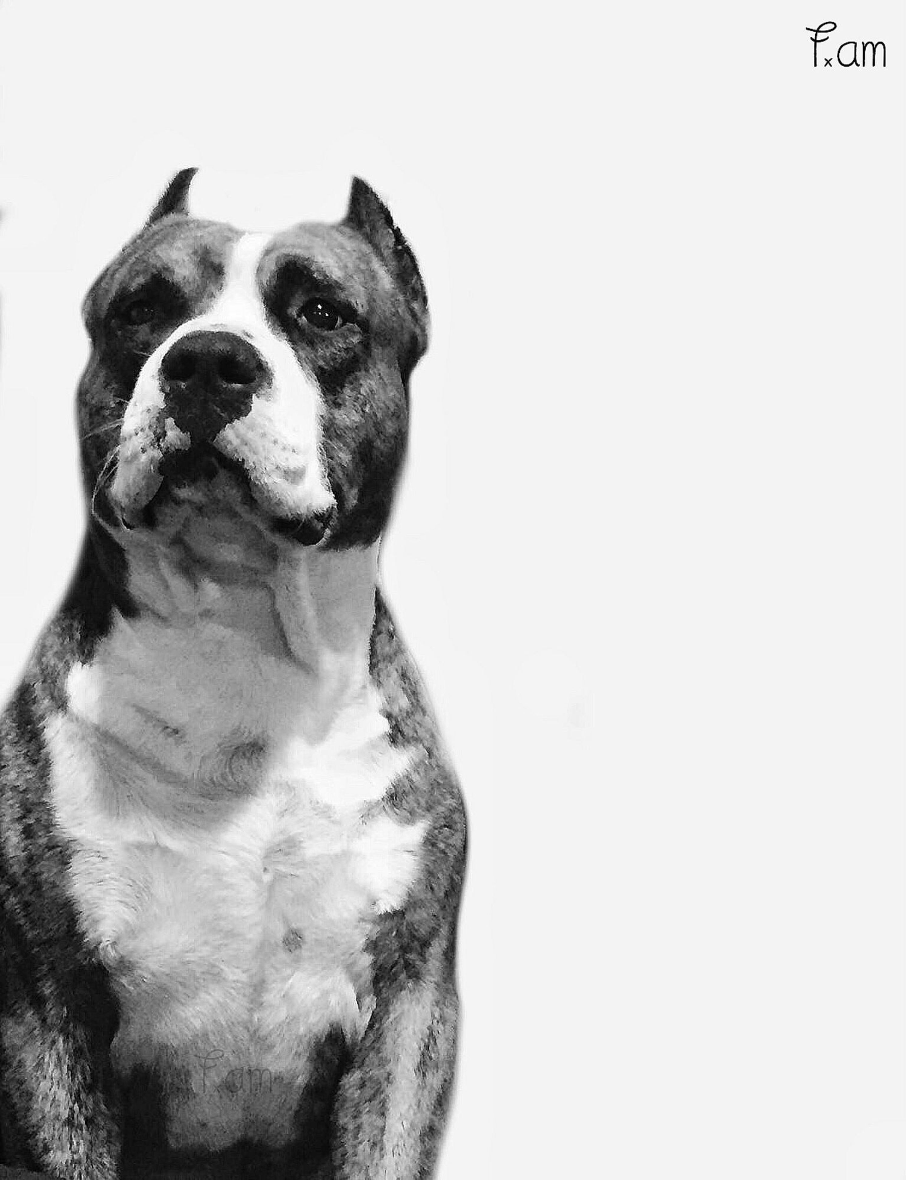 copy space, one animal, animal themes, pets, clear sky, domestic animals, dog, studio shot, white background, mammal, no people, close-up, nature, white color, day, outdoors, full length, animal head, wall - building feature, sky