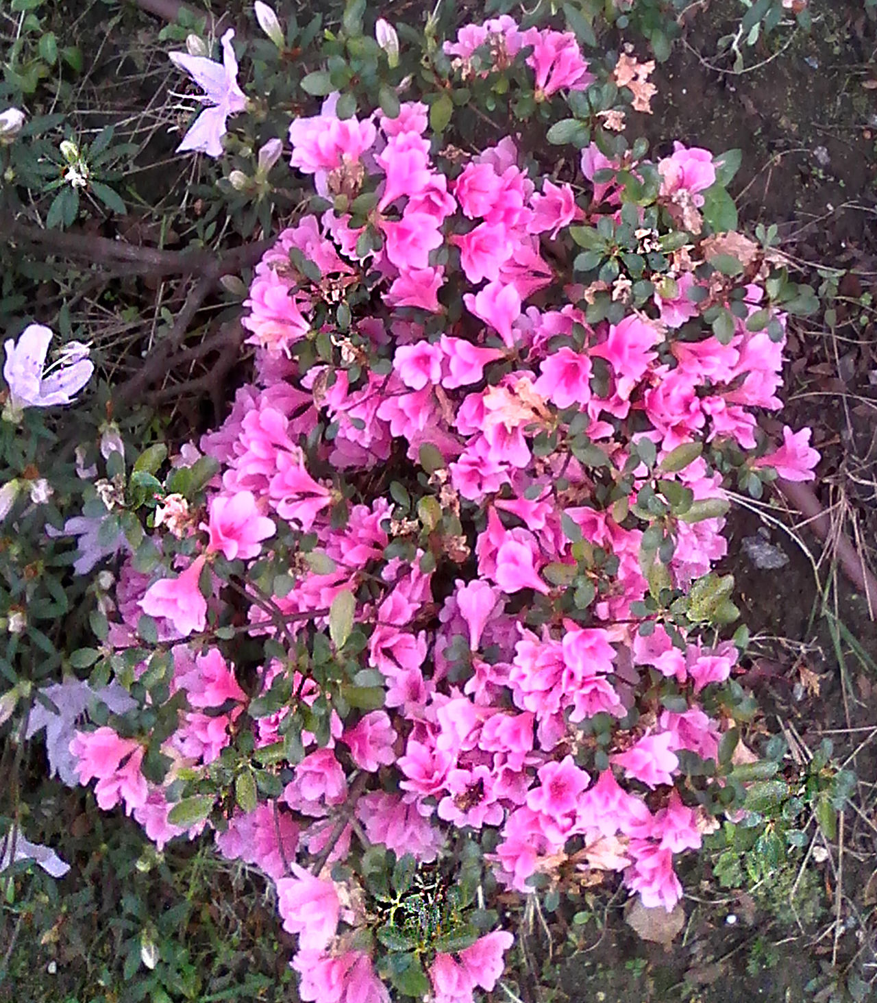 Vitalis Park_Dragon Force Beauty In Nature Day Flower Freshness Growth Nature No People Outdoors