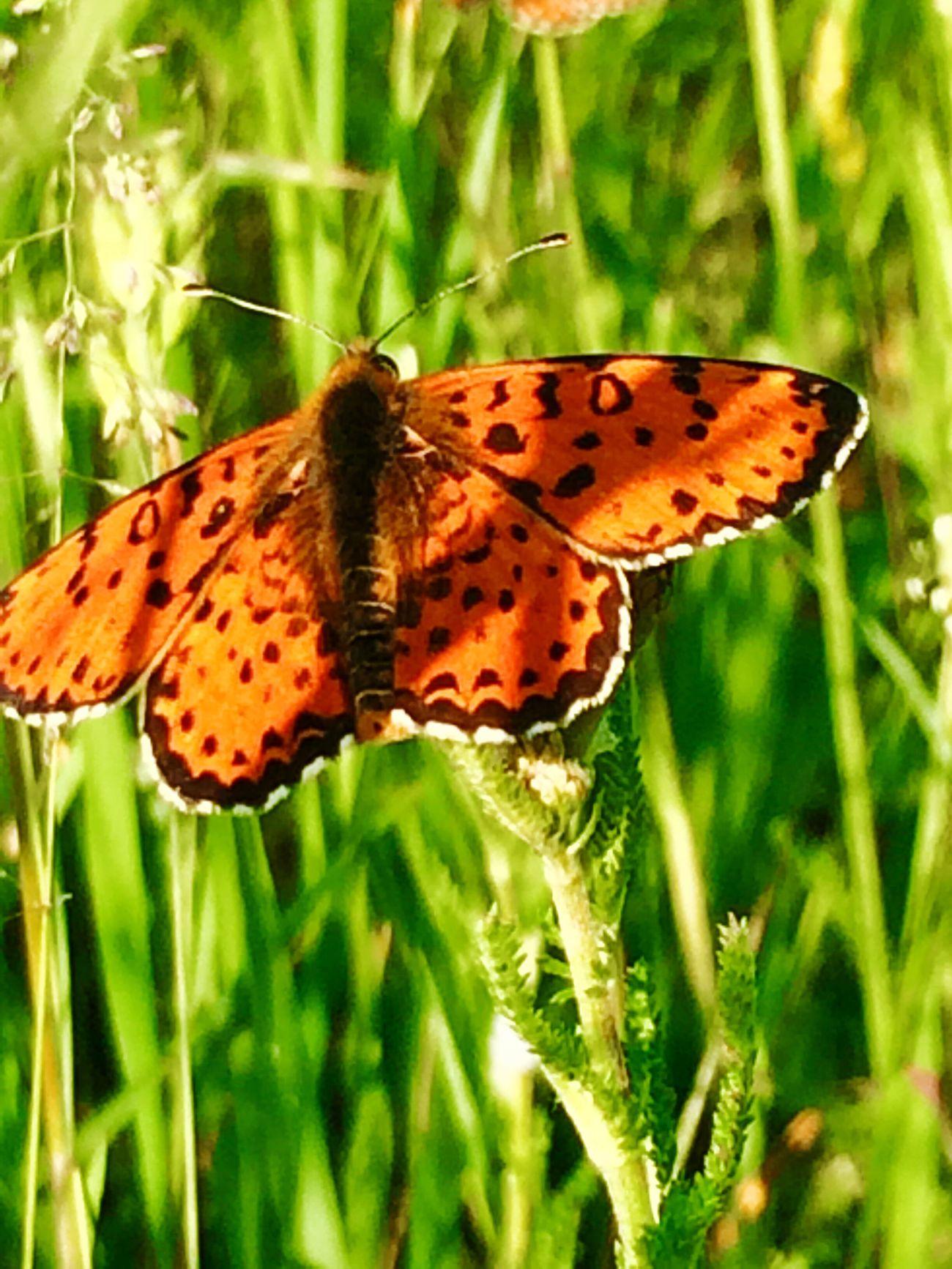 Butterfly LoveNatureAndMountain