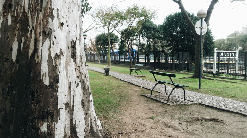 Streetphotography VSCO Cam Outside Grande árbol Estación De Tren Parque  Verde