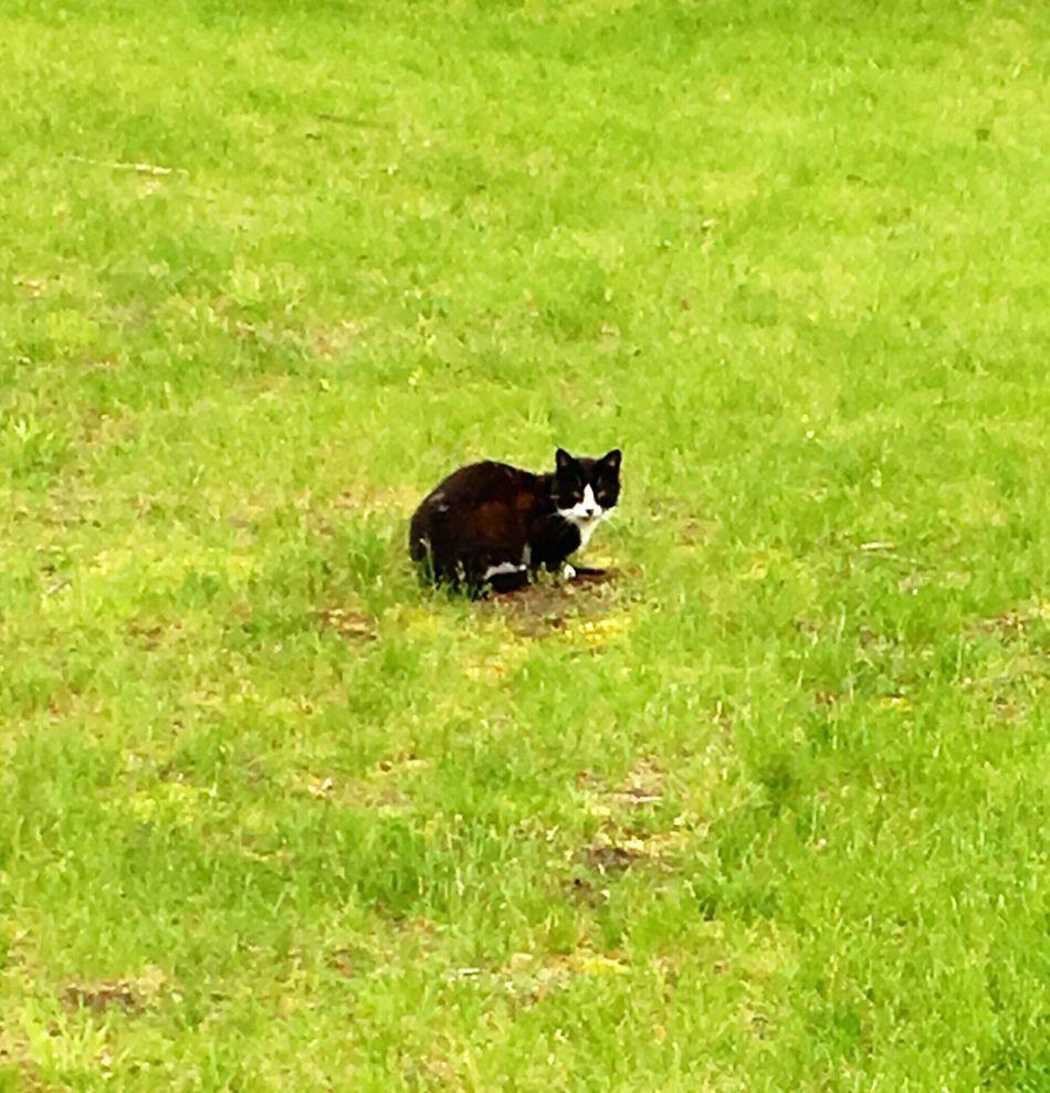 Kitty Kitty Cat Kittycat Kitty Love Kittenoftheday Cat Cats Black Cat Black And White Cat Grass Green Cat♡ Cat Lovers Muscoda, WI Muscoda