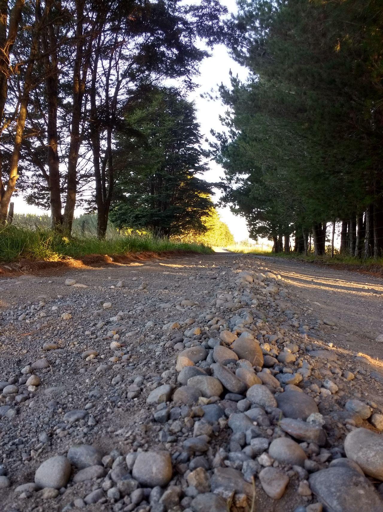 Camino Enpiedrado Camino A La Ciudad Noa Vemos Campo Frutillar Chile