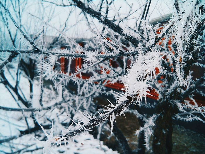 Winter Snow Cold Temperature Weather Nature Frozen Beauty In Nature Close-upSky Chechen Republic No People Day Outdoors Fragility Tree Backgrounds Frost Branch Snowflake Winter2017