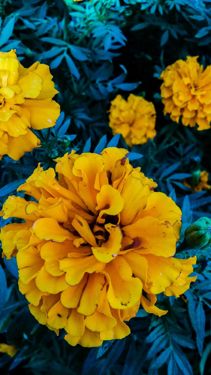 flower, yellow, petal, beauty in nature, fragility, nature, growth, freshness, flower head, outdoors, vibrant color, plant, no people, close-up, day, blooming, springtime