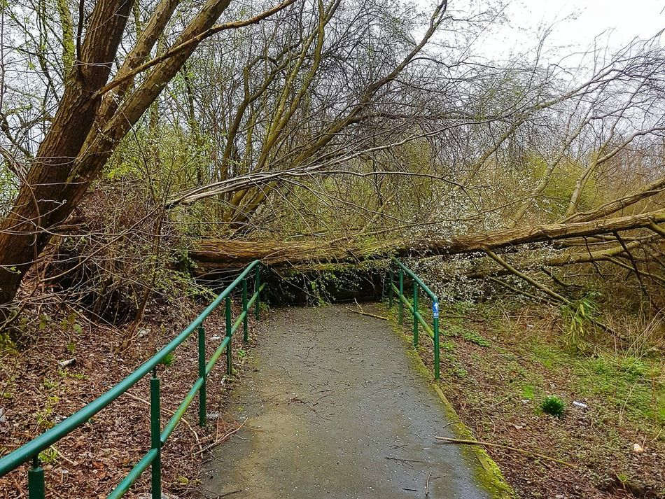 """No entry"" Tree No People Day Outdoors Nature Beauty In Nature Fallen Tree Blocked Path Close-up Sky Wind Power Manchester Scenics"