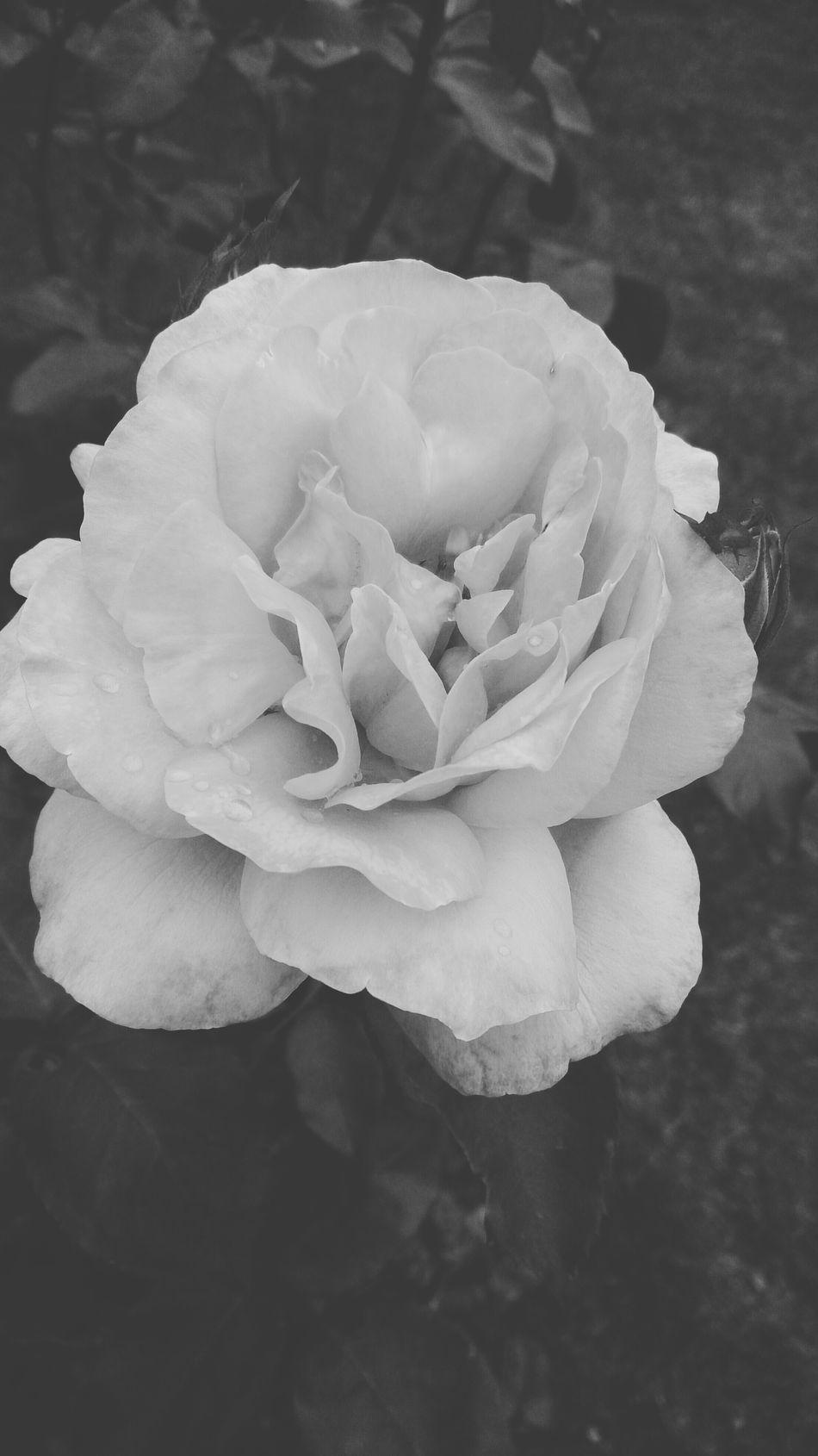 Lo hermoso verdadero y puro esta en la naturaleza