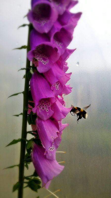 Focused Closeup Eyembestshots Flower Vibrant Bee Insects  Beautiful Edit Vibrantpetals
